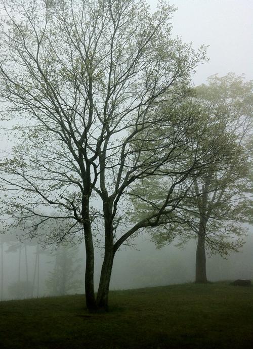 霧の八ヶ岳